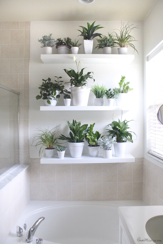 Plants covering one bathroom wall on shelves