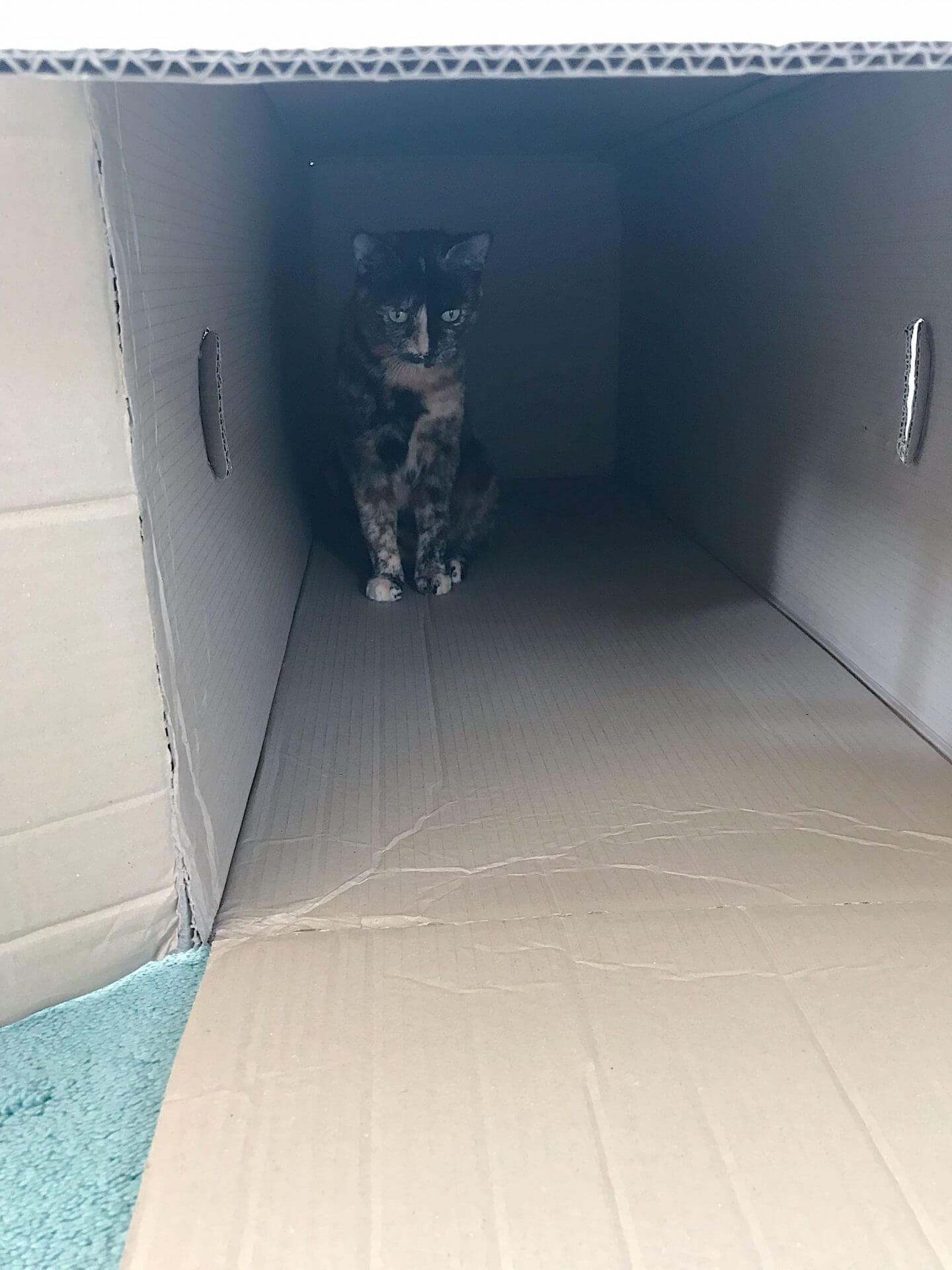 Empty Leesa mattress box with cat inside