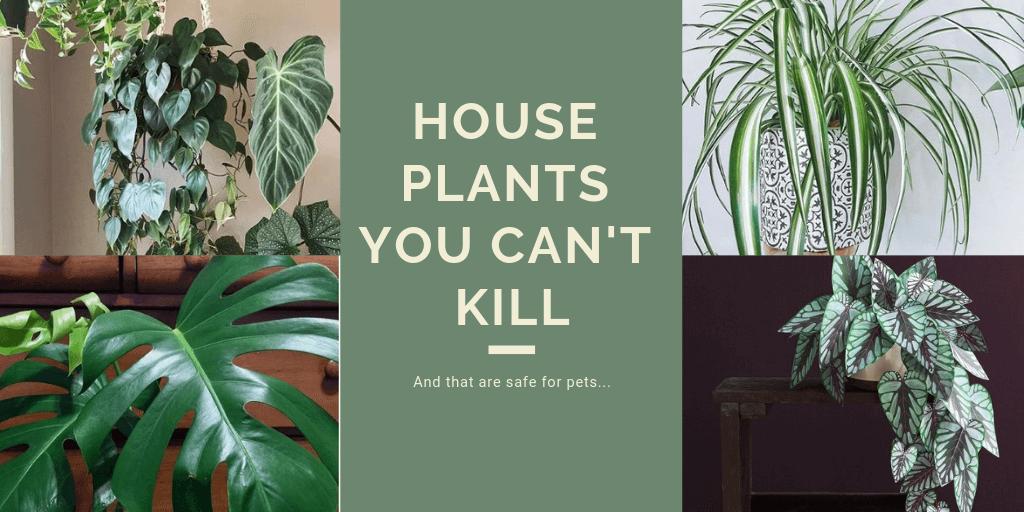 Zimmerpflanzen, auch wenn Sie sie nicht töten können