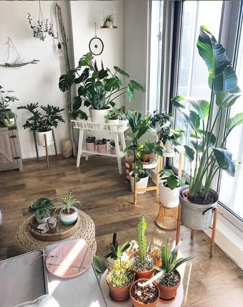 Tonnen Pflanzen im Wohnzimmer